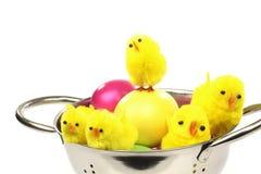 цыпленоки пасха Стоковая Фотография