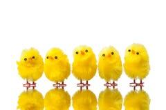 цыпленоки пасха Стоковые Изображения