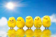 цыпленоки пасха Стоковые Фото