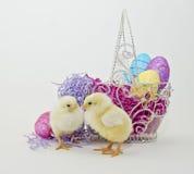 цыпленоки пасха 2 младенца Стоковые Изображения