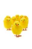цыпленоки пасха Стоковая Фотография RF