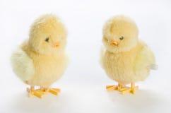 цыпленоки 2 вверх по ветру Стоковая Фотография RF