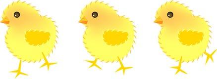 цыпленоки 3 Стоковое Изображение RF