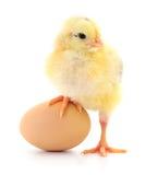 Цыпленок и яичко стоковые изображения