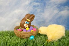 Цыпленок пасхи с кроликом шоколада стоковые фотографии rf