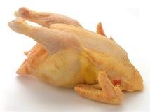 цыпленок сырцовый Стоковое Фото