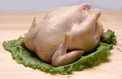цыпленок сырцовый Стоковые Изображения
