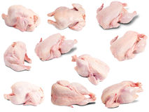 цыпленок сырцовый стоковые фото