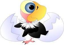 Цыпленок хищника с большими голубыми глазами стоковое фото rf