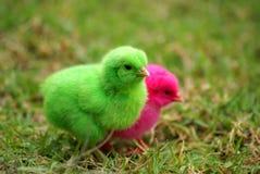 цыпленок Стоковые Фото