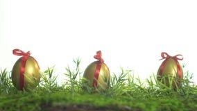 Цыпленок eggs в золотой краске связанной с красной лентой на зеленой траве акции видеоматериалы