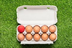 Цыпленок eggs в подносе картона на зеленой траве Стоковые Фотографии RF