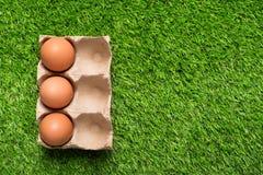Цыпленок eggs в подносе картона на зеленой траве Стоковые Изображения