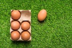 Цыпленок eggs в подносе картона на зеленой траве Стоковые Изображения RF