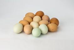 цыпленок eggs heirloom Стоковая Фотография RF