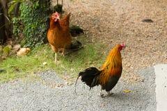 Цыплята в саде стоковые изображения