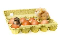 цыплята немногая стоковое изображение rf