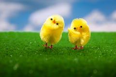 цыплята пасха счастливая Стоковые Изображения