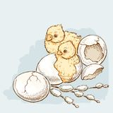 Цыплята пасхи насиживают Стоковое Фото