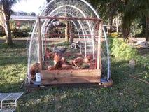 Цыпленк-трактор Стоковые Изображения RF