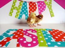 Цыпленоки младенца Стоковое Изображение