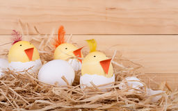 Цыпленоки пасхального яйца в гнезде Стоковое фото RF