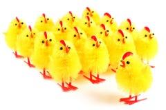 Цыпленоки пасхи, белая предпосылка Стоковые Фото