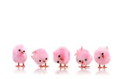 Цыпленоки птицы пинка младенца Стоковое фото RF
