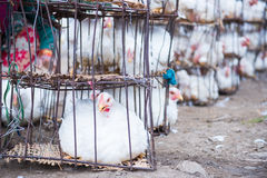 Цыпленок в клетке на продовольственном рынке стоковое фото rf