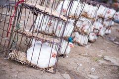 Цыпленок в клетке на продовольственном рынке стоковые изображения rf