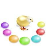Цыпленок золота и красочные пасхальные яйца Стоковые Изображения RF