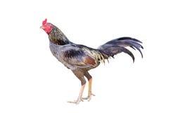 Цыпленок стоковая фотография