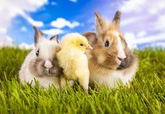 Цыпленок и кролик пасхи Стоковое Фото