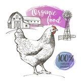 Цыпленок и ферма иллюстрация вектора