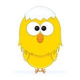 цыпленок милый Стоковая Фотография RF