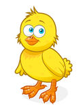 цыпленок милый Стоковые Изображения