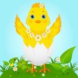 цыпленок младенца милый Стоковая Фотография