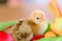 Цыпленок младенца Стоковые Фотографии RF