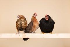 Цыпленок на ручке стоковое изображение
