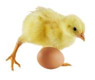 цыпленок немногая Стоковая Фотография