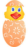 Цыпленок пасхи как раз насиженный от яичек Стоковое Изображение RF