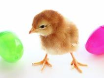 Цыпленок пасхи стоковые фото