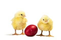 Цыпленок пасхи Стоковые Изображения RF