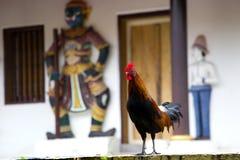 Цыпленок петуха стоковые фото