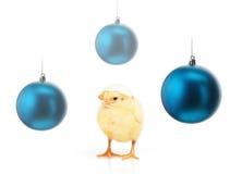 Цыпленок при шарики рождества eggshell и сини изолированные на белизне Стоковое Фото