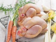 цыпленок свежий стоковые изображения rf