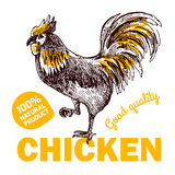 Цыпленок фермы Eco Стоковые Изображения