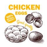 Цыпленок фермы Eco Стоковое Фото