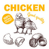 Цыпленок фермы Eco Стоковые Фотографии RF