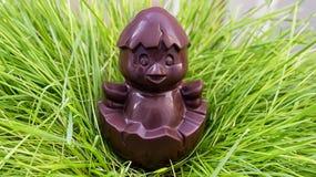 Цыпленок шоколада сидя на гнезде травы стоковая фотография rf